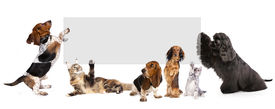 pic of coon dog  - cats and dogs holding a cork banner - JPG