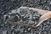 Shovel Full  Coal