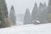 Heavy Snowstorm Over Alpine Meadows In Forest