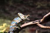 stock photo of terrarium  - Profile of Green basilisk at a terrarium