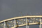 Pigeons Landing To The Bridge