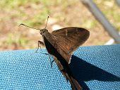 Moth On Canvas Macro