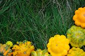 Yellow Squashes on Grass