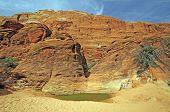 Desert Water Hole Beneath Red Rock Cliffs