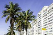 Palms on Copacabana Beach, Rio de Janeiro, Brazil - South America
