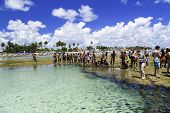RECIFE, BRAZIL - CIRCA JAN 2014 - Tourists enjoy the Barrier reef tour in Porto de Galinhas, Recife, Pernambuco - Brazil