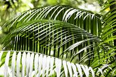 Plants in Amazon Forest, Brazil