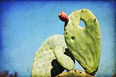 foto of nopal  - Ripe Prickly pair cactus and fruit against a blue sky - JPG