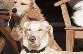 Dogs on fall sun lit porch