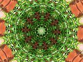 Virginia Creeper kaleidoscope