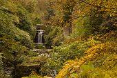 Jesmond Dene Waterfall In Autumn