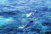 Diving at Great Barrier Reef, Queensland