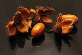 image of beechnut  - Acorns and beechnuts seasonal autumn fruits are on the black board with visible reflection - JPG