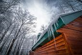 picture of shacks  - A walk through the deciduous maple woods and a visit to the maple syrup cabin shack - JPG