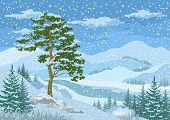 stock photo of grass bird  - Winter Mountain Landscape with Pine and Fir Trees - JPG