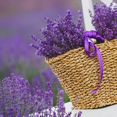 foto of lavender field  - Summer - JPG