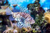 stock photo of algae  - The underwater world - JPG