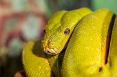 pic of green snake  - fantastic close - JPG