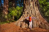 foto of redwood forest  - Woman with straight arms near the big tree in Redwood California during summer sunny day - JPG