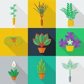 image of sansevieria  - Illustration of houseplants - JPG