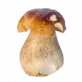 stock photo of boletus edulis  - Boletus edulis mushroom isolated on white background close up - JPG