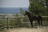 Black horse with sea view