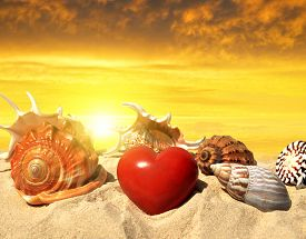 stock photo of conch  - Conch shell with heart on beach in the sunset - JPG