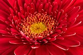 Beautiful and fresh red flower close-up