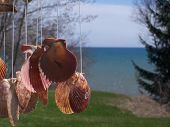 image of windchime  - This is taken from the back of my cottage and the seashells are from a windchime - JPG