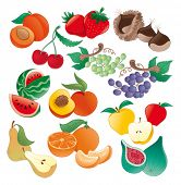 Fruit - vector illustration, object isolated