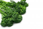 Baby Broccolini photographed on white