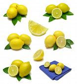 Lemon sampler with clipping path