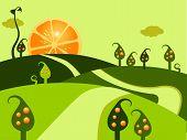 Orange Land