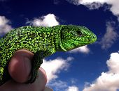 Lizard On Hand In Clouds