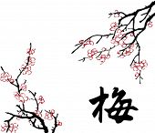 Vector of Chinese Traditional Artistic Plum Blossom Pattern,The Chinese Word Means