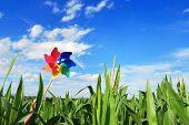 Pinwheel at Corn Field
