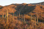 Saguaro National Park no pôr do sol
