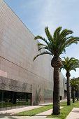 de young Museum hautnah mit Palmen