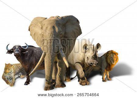 African Safari With Big Five