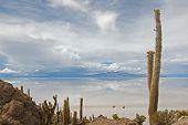 Cacto de Cardon na Isla De Pescador, Bolívia