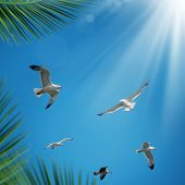 flying seagulls over clear sunny sky with sunbeam poster