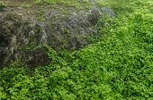Large Rock With Dirt And Dirt Surrounded By Green Leaves, Pattern Of Green Leaves, Earth Texture And poster