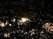 Silhouette Of Bushes , Suntime Bush Dark Nice Sunrays poster
