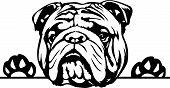 Animal Dog English Bulldog R5Fvgbdf6 Peeking.eps poster