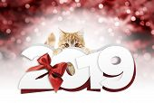 Ginger Cat Showing Happy New Year 2019 Text With Red Ribbon Bow On Blurred Red Christmas Lights, Sig poster