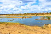 Landscape Of Olifants River In Kruger National Park, South Africa. Cape Hippopotamus Or South Africa poster