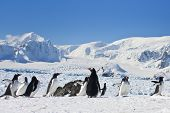 a large group of penguins having fun in the snowy hills of  Antarctica