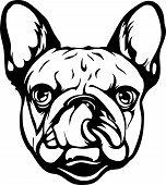 Animal Dog French Bulldog 7B.eps poster
