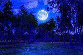 Pinienwald um Mitternacht mit einem hellen Vollmond