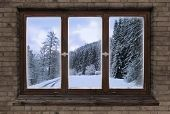 Window Old Wood Window Frame Sprouts Winter Christmas poster